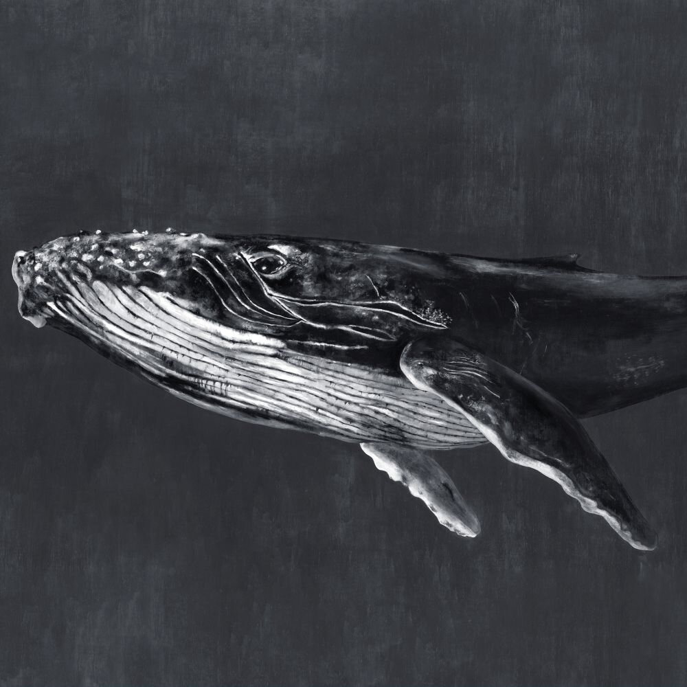 Humpback Whale Mural - Night - by Coordonne