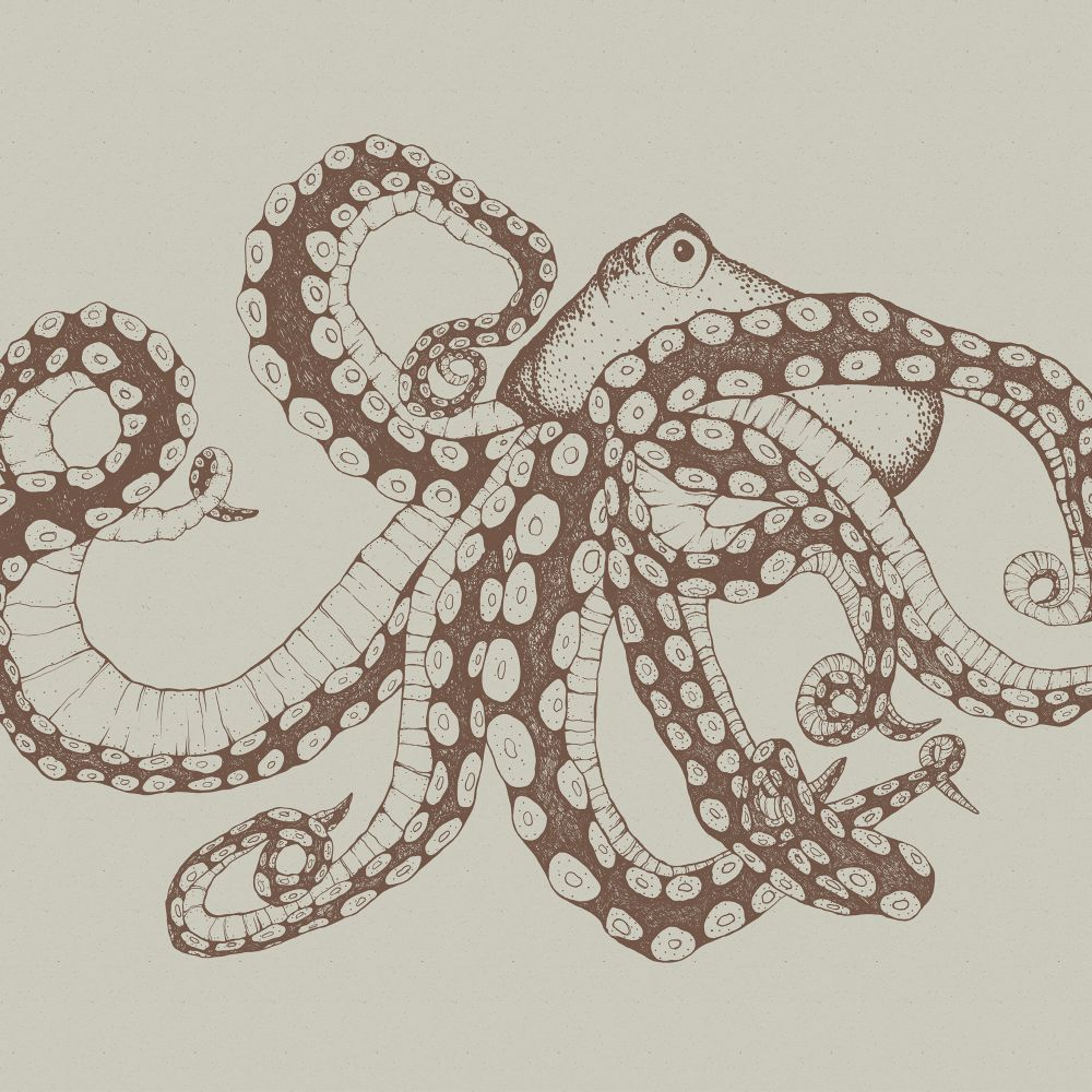 Octopus X-Ray Mural - Papirus - by Coordonne