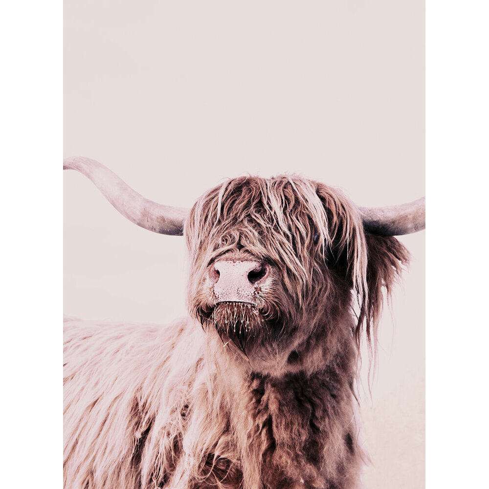 Highland Cattle 1 Mural - Brown - by ARTist